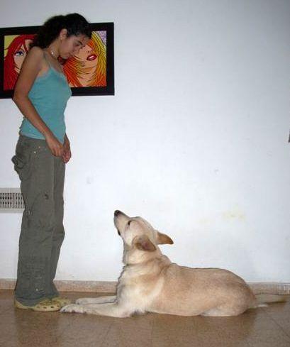 comment comprendre son chien